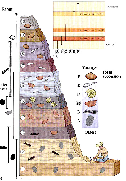 relative dating methods stratigraphy Using relative dating and methods of absolute dating are discussed in the lecture significant breaks in the stratigraphic.
