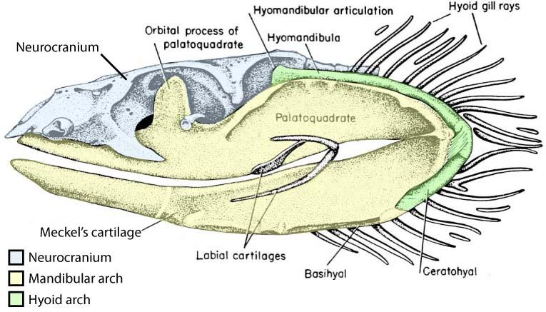 Geol431 Vertebrate Paleobiology