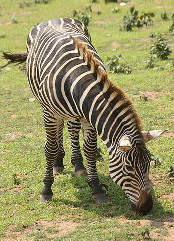 Animal  Wikipedia