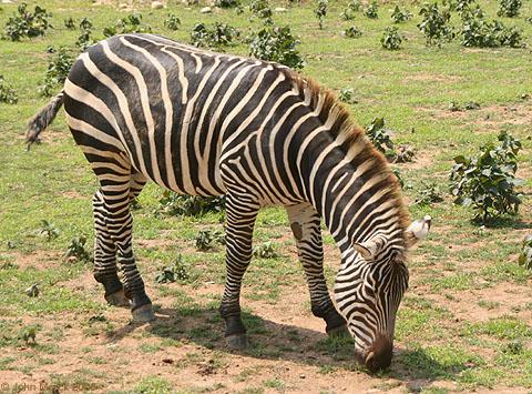 Endangered Species List  Earths Endangered Creatures