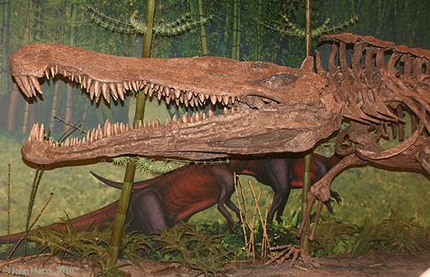 redondasaurus74559s.jpg