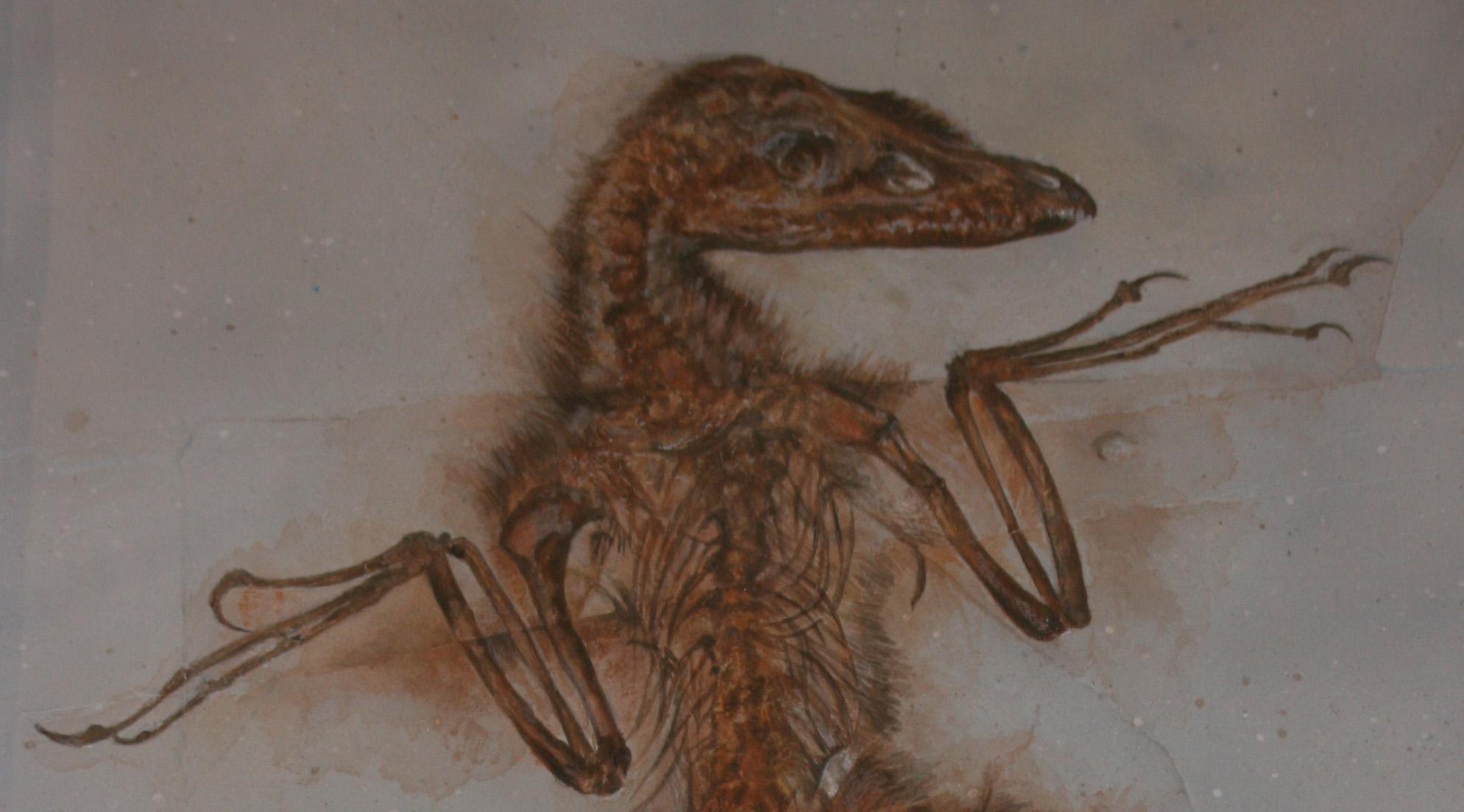 sinornithosaurus74628det.jpg