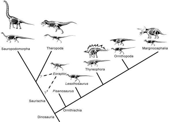 Geol 104 Lecture 15 The Dinosaur Family Tree What Is A