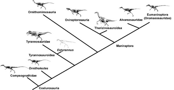 Image result for Coelurosaur family tree