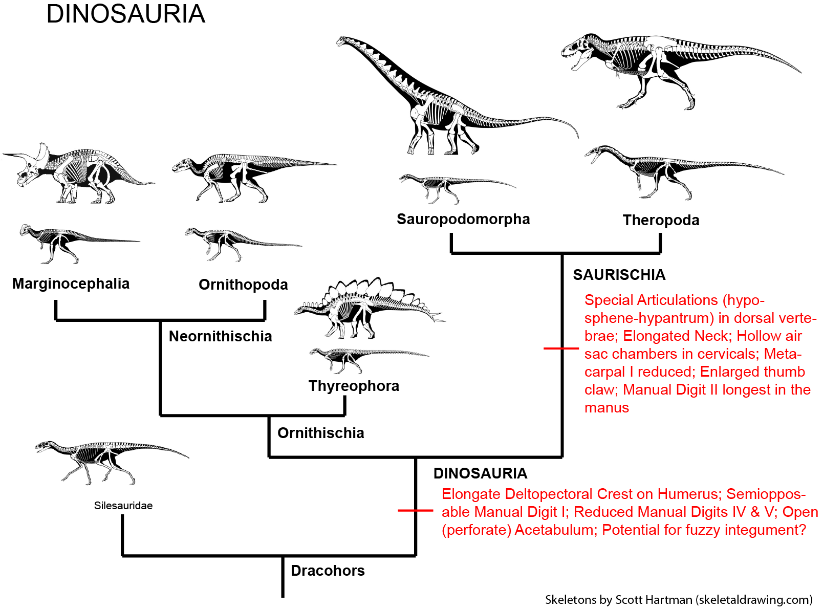 geol 104 the rise of the dinosaurs  what is a dinosaur